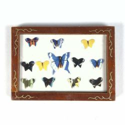 Butterfly Display Box