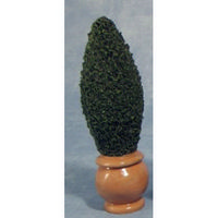Potted Conifer Tree